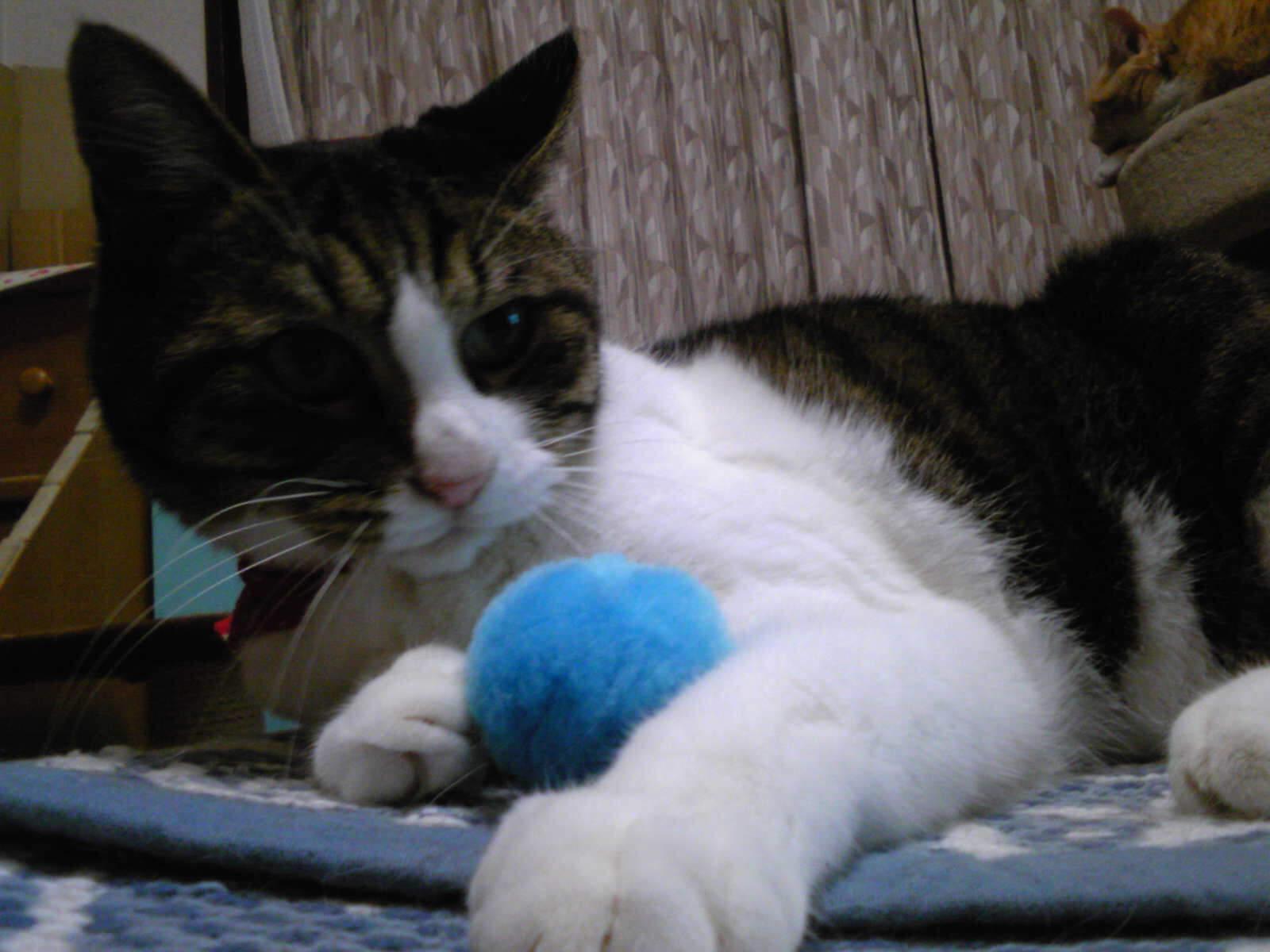 小顔ボールとネコ…