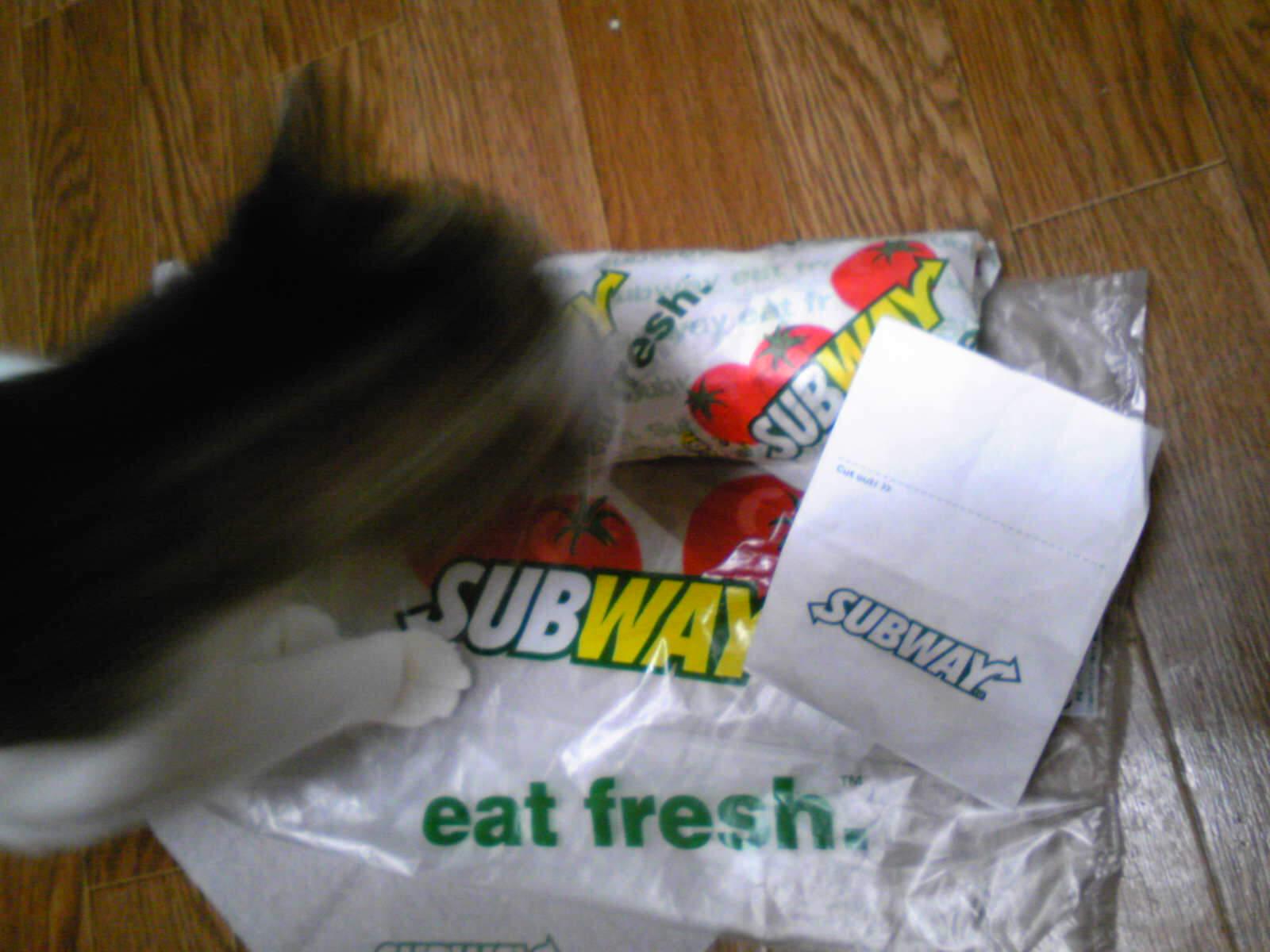 サンドイッチデビューなネコ…