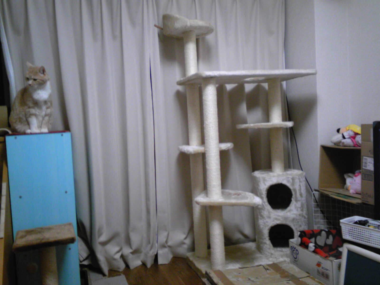 新ネコタワーに無関心なネコ…