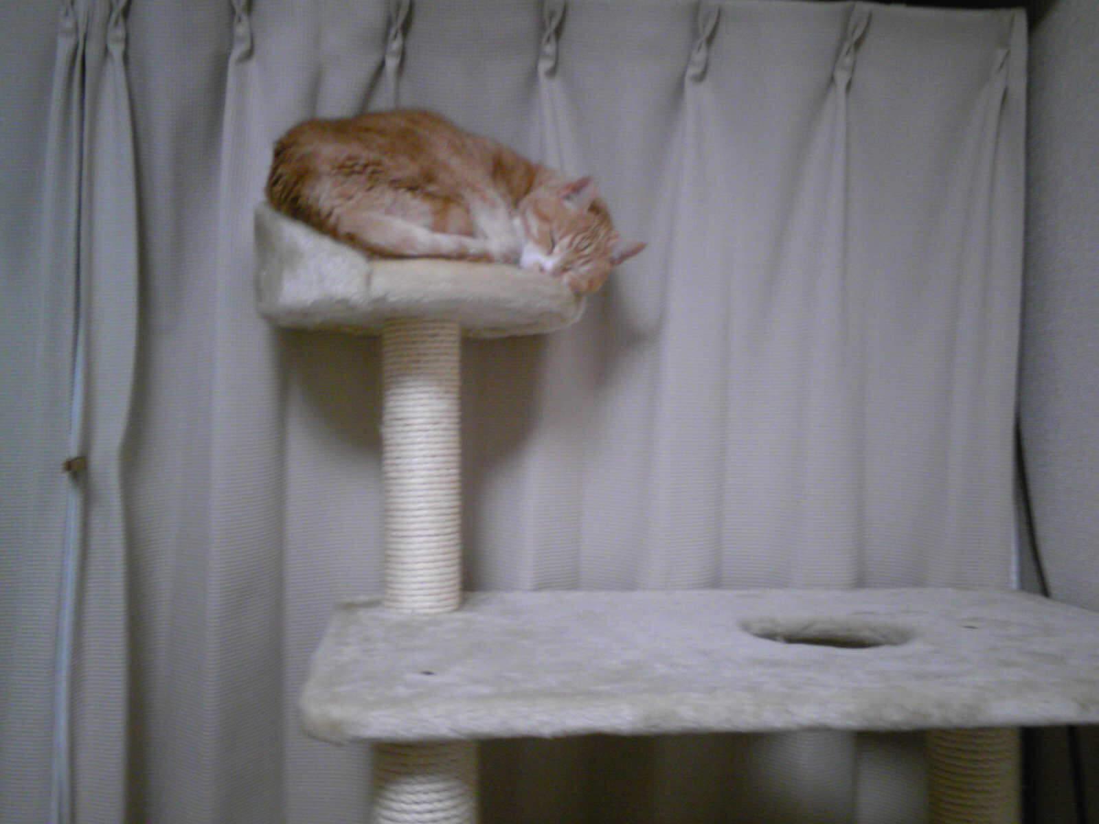 ムリクリなネコ…