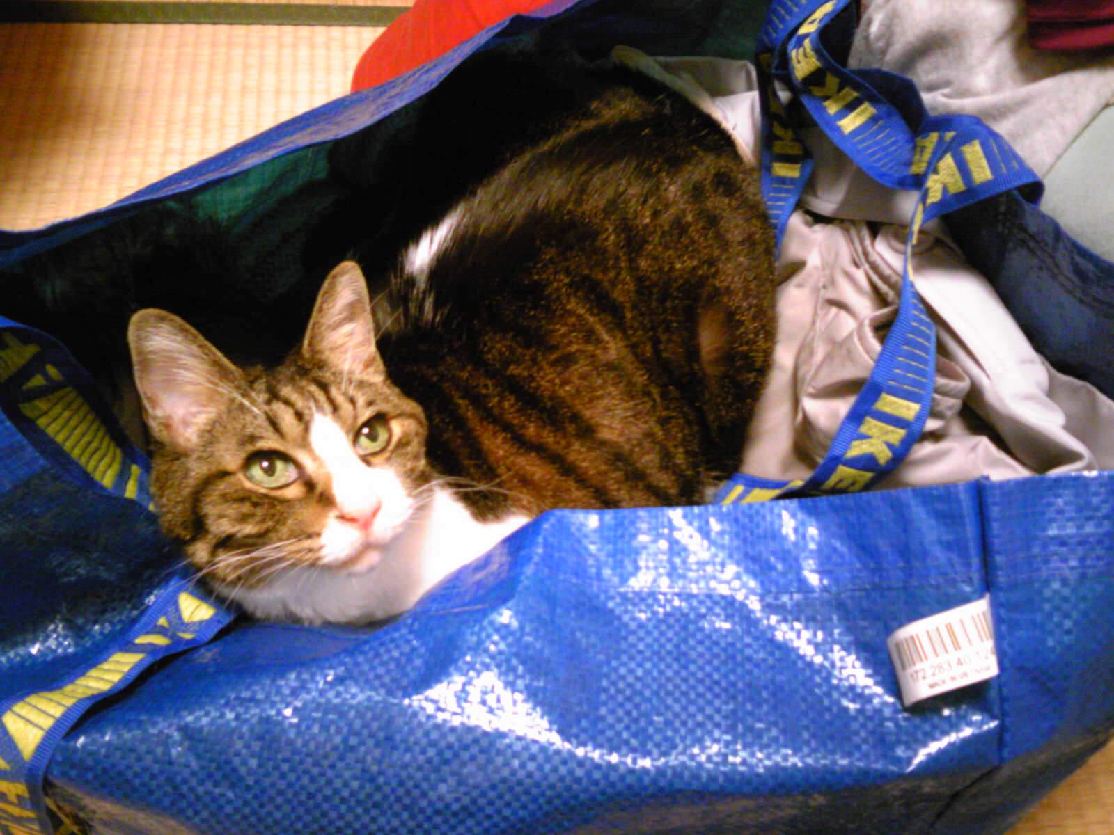 洗濯物とネコ…
