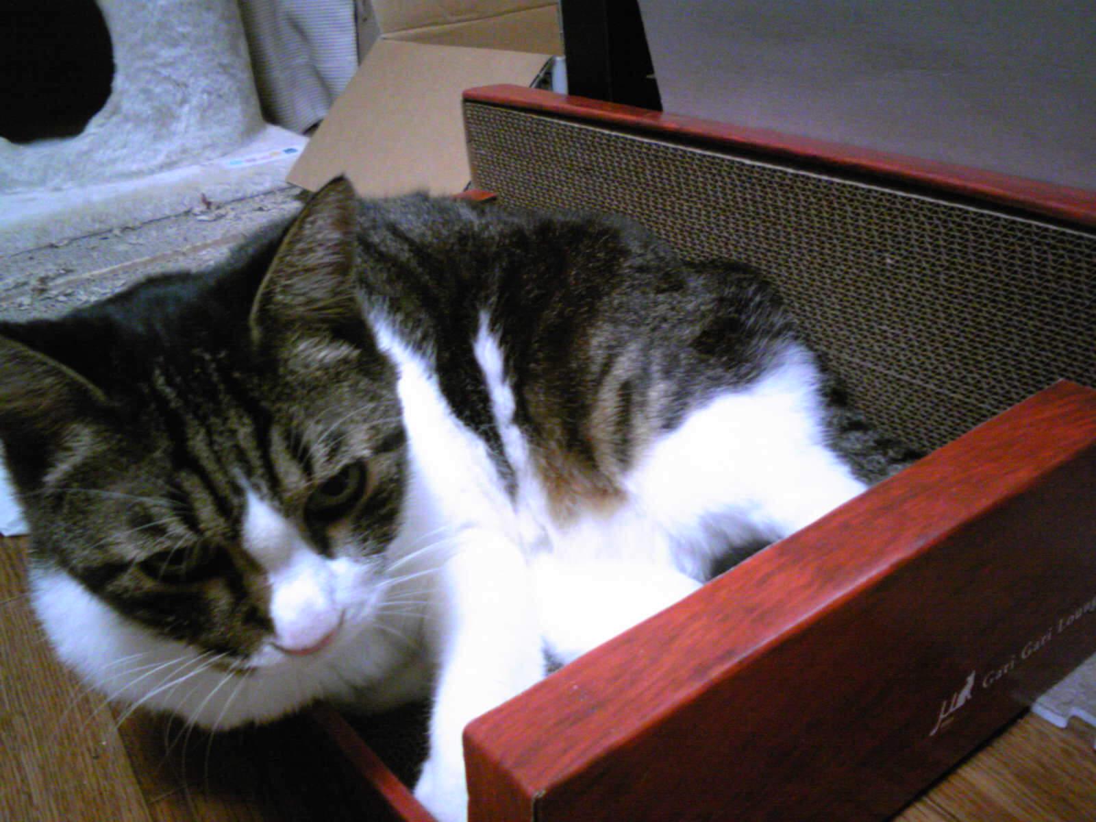 つめ研ぎに入るネコ…