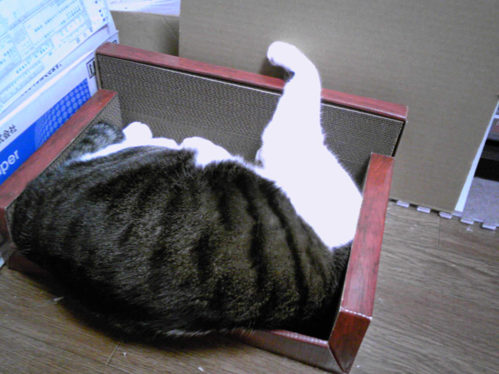 肩から下なネコ…