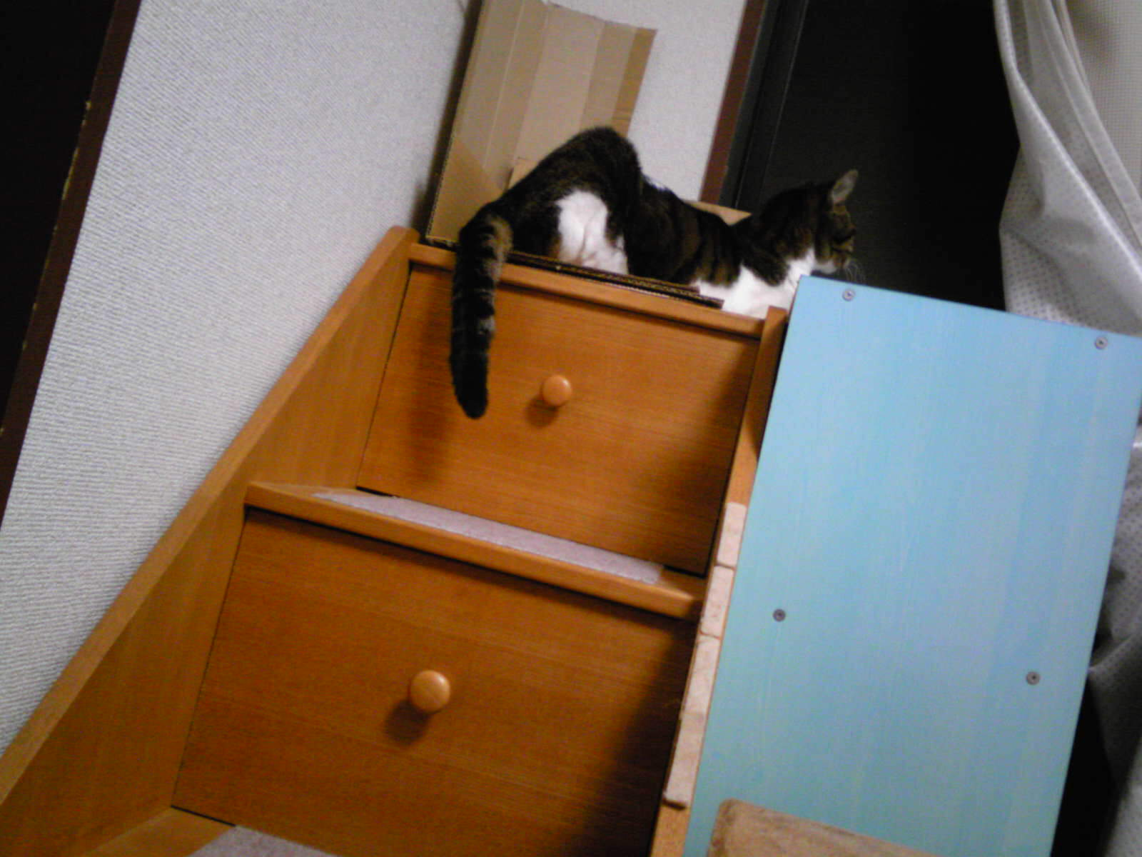 階段登るネコ…